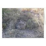 Rabbit Hiding In Grass Card
