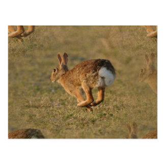 Rabbit Hopping Postcard