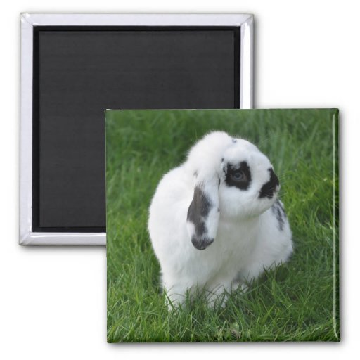 Rabbit imán