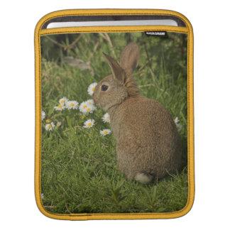 Rabbit iPad2 Sleeve iPad Sleeve