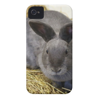 Rabbit iPhone 4 Case-Mate Case