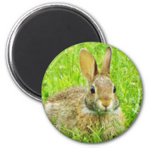 rabbit magnet