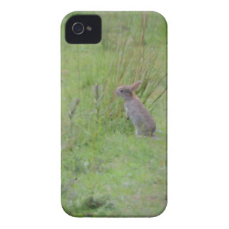 Rabbit Meadow iPhone 4 Covers