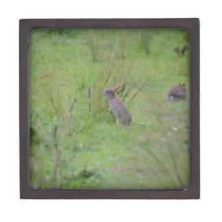 Rabbit Meadow Keepsake Box