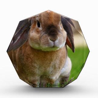 Rabbit minni lop acrylic award