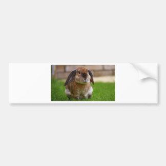 Rabbit minni lop bumper sticker