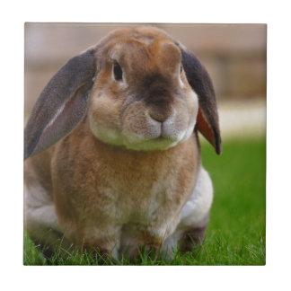 Rabbit minni lop ceramic tile