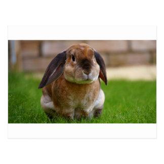 Rabbit minni lop postcard