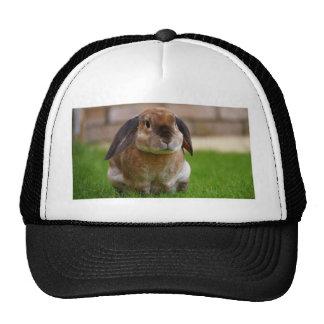 Rabbit minni lop trucker hat