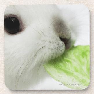 Rabbit nibbling lettuce leaf, close-up drink coasters