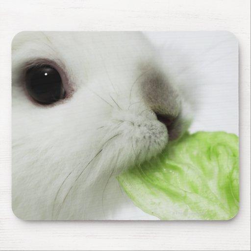 Rabbit nibbling lettuce leaf, close-up mouse pads