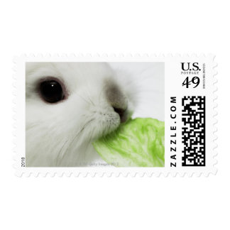 Rabbit nibbling lettuce leaf, close-up postage