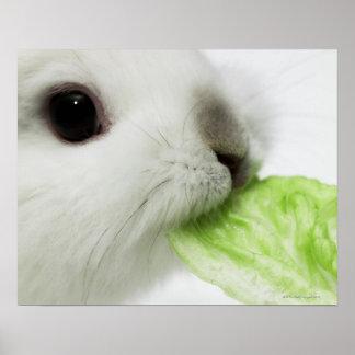 Rabbit nibbling lettuce leaf, close-up poster