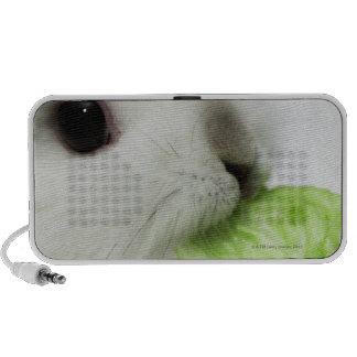 Rabbit nibbling lettuce leaf, close-up iPhone speaker