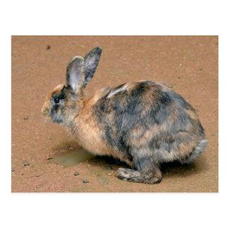 Rabbit on the ground postcard
