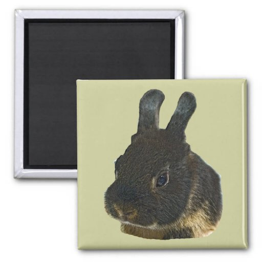 Rabbit Pet Refrigerator Magnets