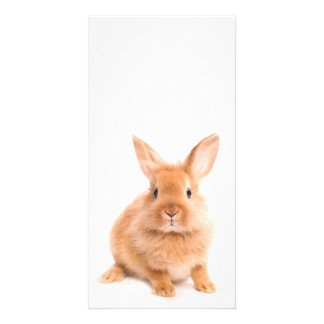 Rabbit Photo Cards