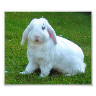rabbit photo print