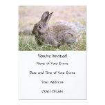 Rabbit Picture 5x7 Paper Invitation Card