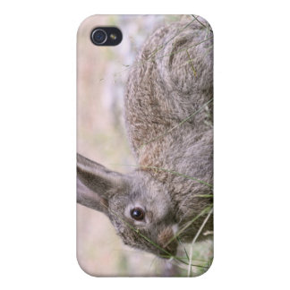 Rabbit Picture iPhone 4/4S Covers