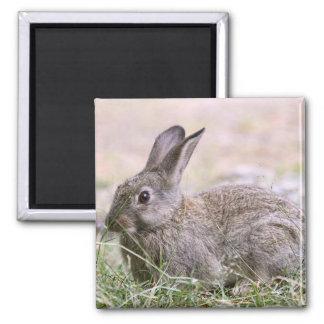 Rabbit Picture Magnet