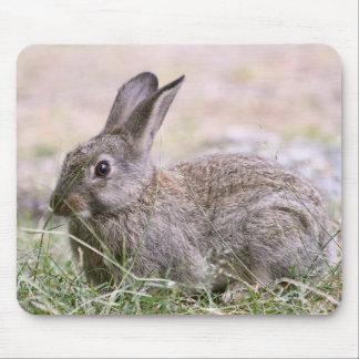 Rabbit Picture Mouse Pad