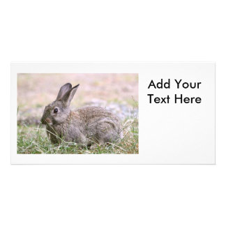 Rabbit Picture Picture Card