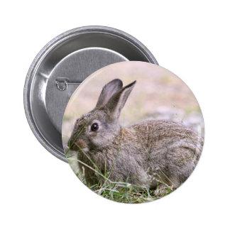 Rabbit Picture Pinback Button