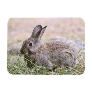 Rabbit Picture Vinyl Magnet