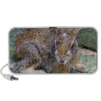 Rabbit Picture Speakers