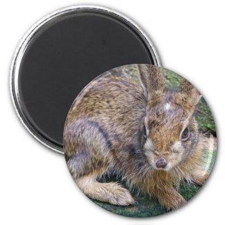 Rabbit Pictures Magnet Fridge Magnet