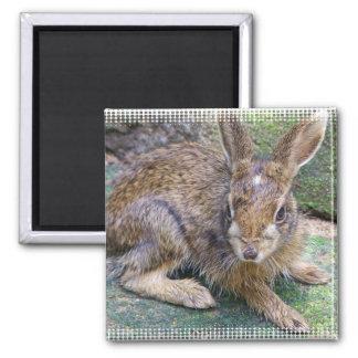 Rabbit Pictures Square Magnet Magnet