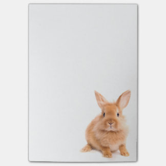 Rabbit Post-it Notes