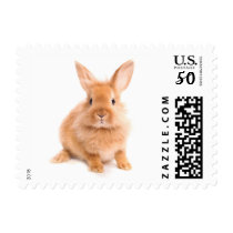 Rabbit Postage