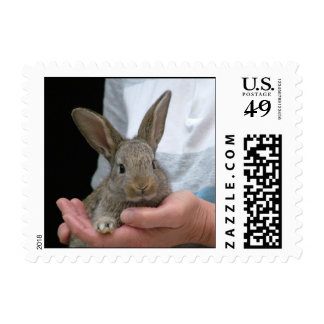 rabbit postage