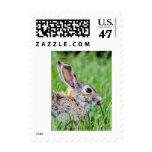 Rabbit Postage Stamp