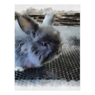 Rabbit Postcards
