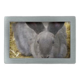 Rabbit Rectangular Belt Buckle