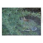 Rabbit, Reno Nv  2014 Greeting Card