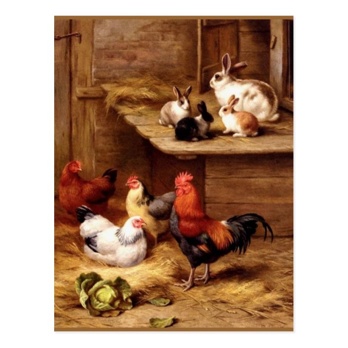Rabbit rooster hens farm animals bunnies postcard
