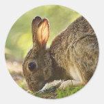 Rabbit Round Stickers