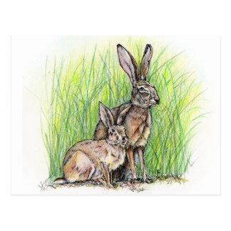 Rabbit Royalty Postcard