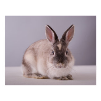 rabbit,simple background,animal,white table, postcard