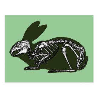 rabbit skeleton postcard