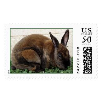 Rabbit Stamp, First Class Postage