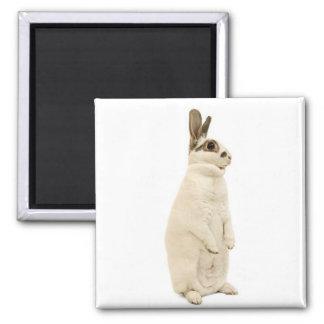 Rabbit Standing Refrigerator Magnets