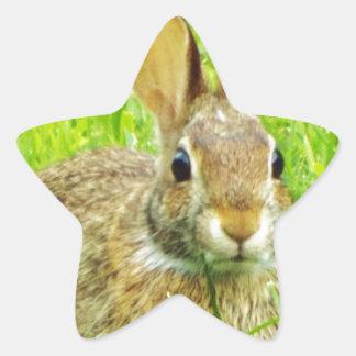 rabbit star sticker