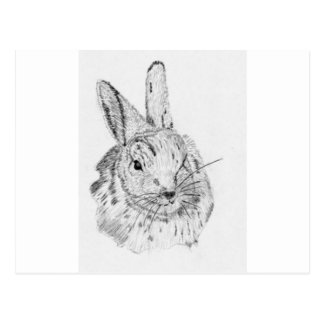 Rabbit Wild Postcards