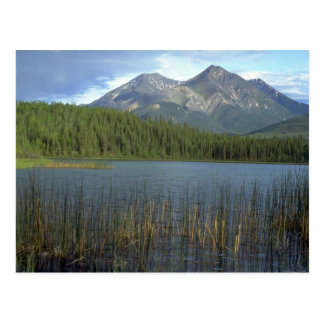 Rabbitkettle Lake in Nahanni National Park, NWT, C Postcard