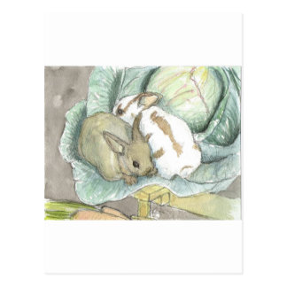 Rabbits and cabbage postcard